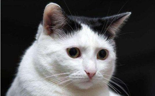 揭秘中国人不吃猫肉的诸多神秘原因