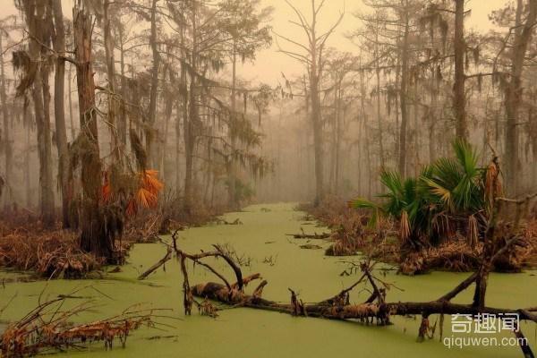 swamp1-e1353365153546