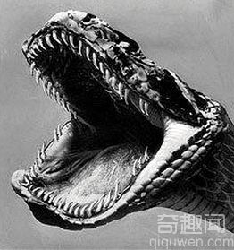 全球十大神秘怪兽 科学家都难以解释的谜团