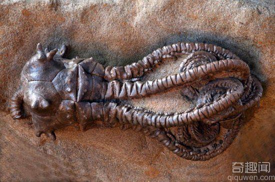 异形生物盘点  全球非常罕见的动物