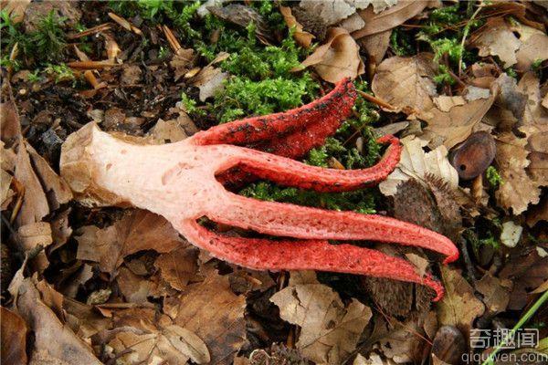 什么鬼?长在大自然中的人体器官