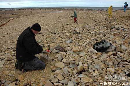 [图文]新发现最古鲎化石较原估计早1亿年