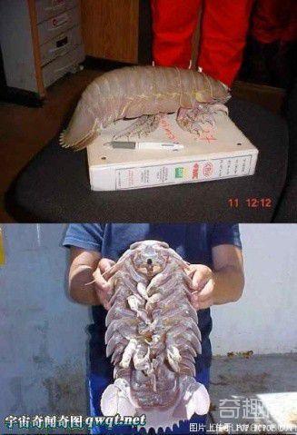 图解世界上的奇怪动物:深海怪鱼 巨型怪物