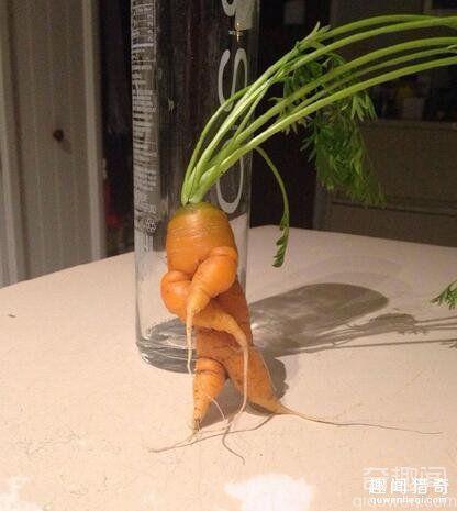蔬果都成精了 没点特色怎么在蔬果圈混下去