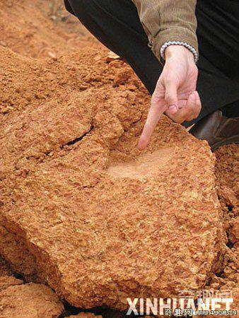 [图文]湖南出土距今30万年以上的石制砍砸器