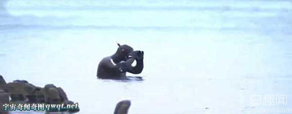"""""""琥珀之都""""俄罗斯海滩琥珀被海浪吹上岸 民众掀""""淘宝潮"""""""
