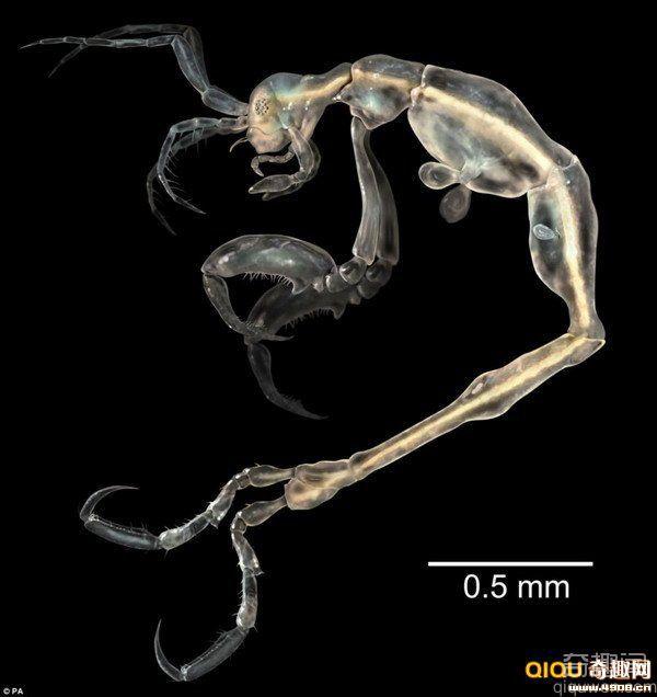 2014最新发现的地球物种源泉之一。