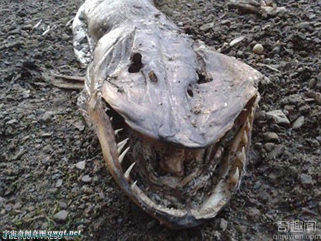 英国岸边浮现满口锯齿的怪物尸体