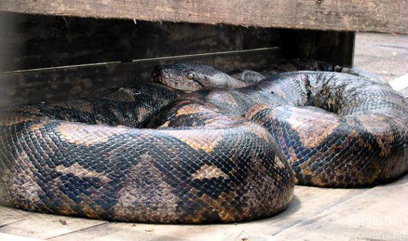 十二种世界上最大的动物汇总 你知道几个?
