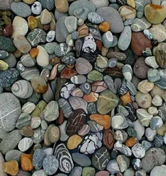 考眼力:能6秒内在石头中找到男子的,智商绝对是195以上!