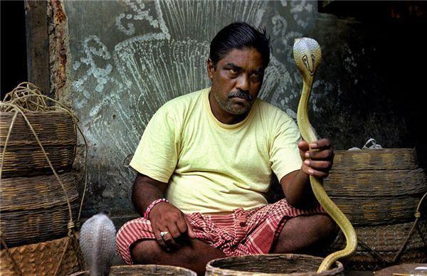 印度小哥吸毒蛇,被咬之后超开心!