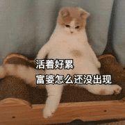 前方高能:老外中式英语测试得几分?爆笑解读承包一年笑点!