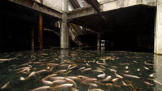 泰国一个废弃商场,被鱼类占领20年,如同人类消失后的城市废墟