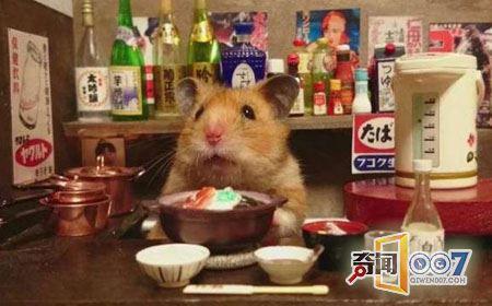 这间小酒吧非常不一般,它的吧台服务员绝对人见人爱