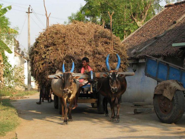 印度人为中国手机花了5千亿卢比:小米收入4倍于华为 排名第一