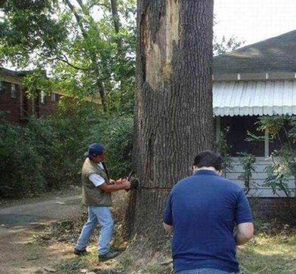 男子嫌树碍眼决定砍掉,热心邻居前来帮忙,结果倒下的一刻悲催了