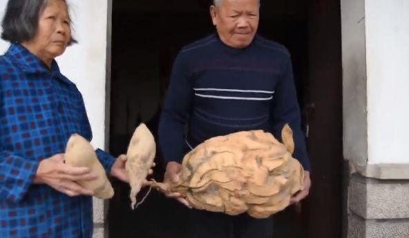 """农村老人地里挖出一""""肥鸭"""",抱回家后,村民不淡定了"""