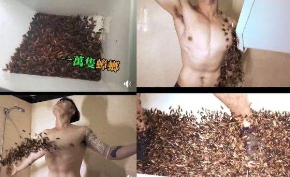 男子作死买来1万只蟑螂,并让它爬到身上,网友评论炸了