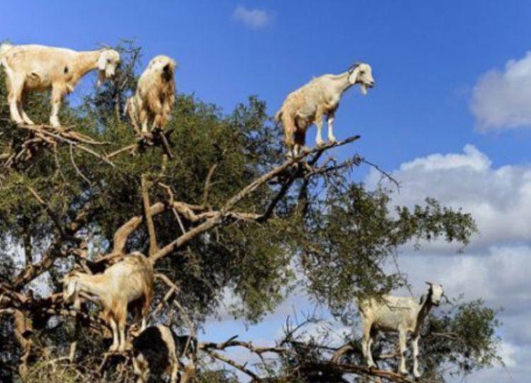 男子发现一棵树上挂满了羊,好奇走近一看,才得知心酸真相!