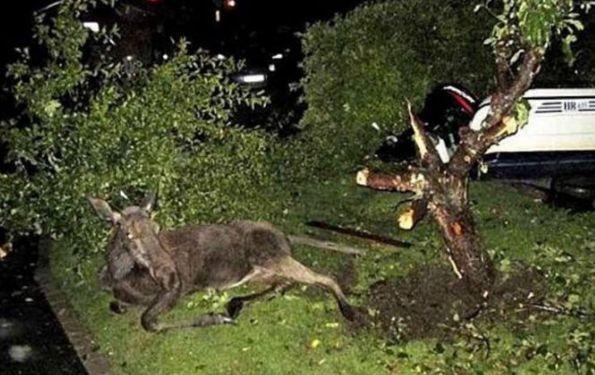 """男子野外开车,发现一动物""""跟树过不去"""",解救后得知真相很意外"""