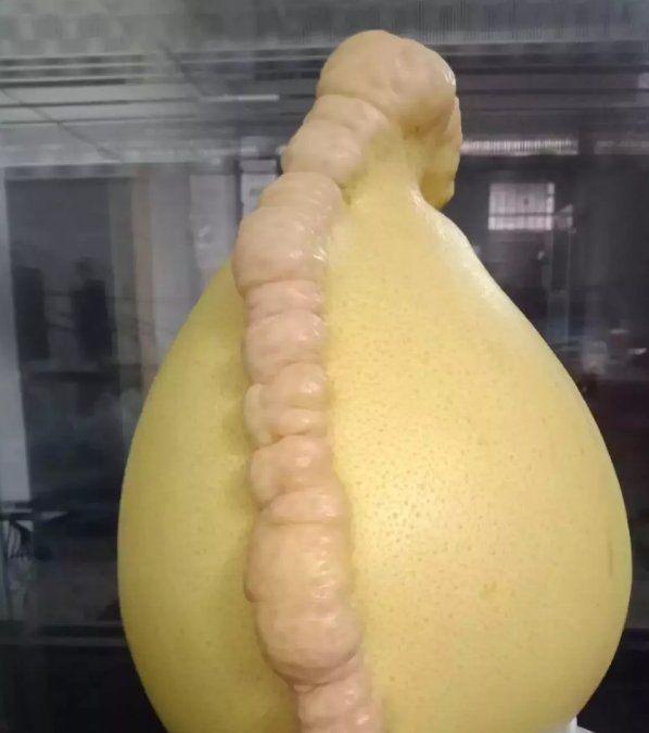"""女子买回一个""""畸形""""的柚子,刚准备丢掉,爷爷看清后竟两眼放光"""