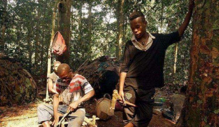非洲有个矮人国,身高只有1米3,喝露水吃白蚁,被称作最后的猎人