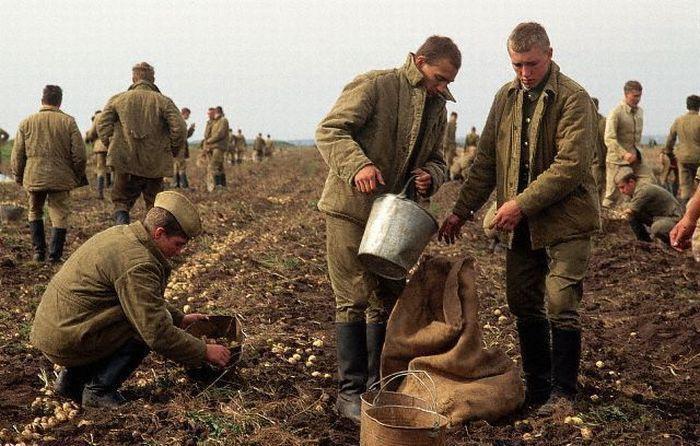 苏联地广人稀沃野千里,为何粮食却经常不够吃