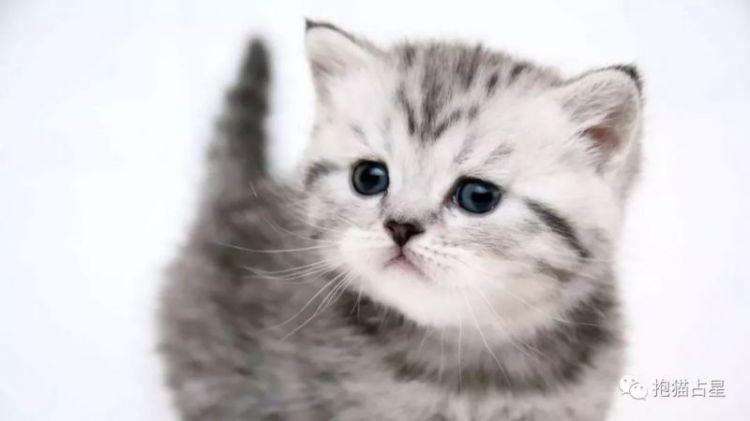 抱猫占星2019年天秤座全年运势——感情变好,利好学习!
