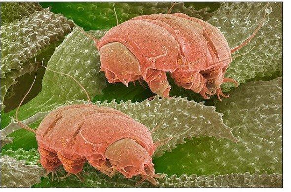 奇妙的微观世界,它们数量是人类的10亿倍,可以在真空中生存!