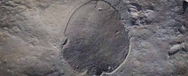 """""""世界上最早的动物""""真的和我们想象的相同吗?"""