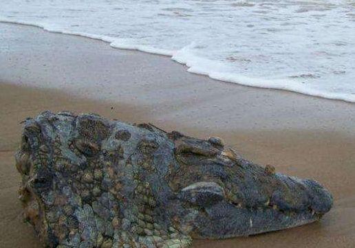 年轻女子在沙滩漫步,走累坐到一块石头上休息,路人一看惊叫吓跑