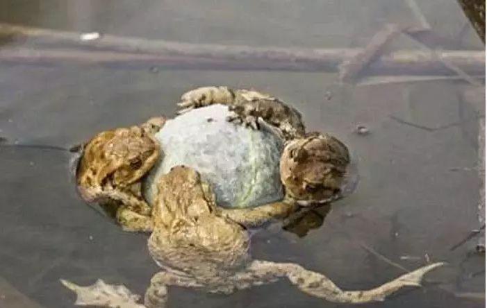 小孩村口捡到一块白色石头,一怒之下丢进池塘,第二天一瞧惊喜了