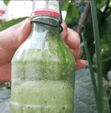 男子将小黄瓜塞进塑料瓶,几个月后黄瓜成熟了,黄瓜都卖出了高价