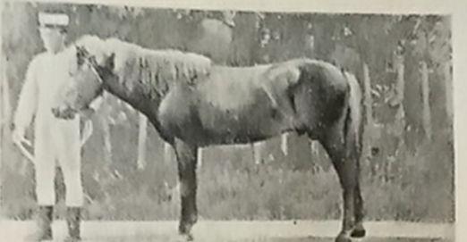 """曾比驴子还迷你,为何最后成了""""大洋马"""",简述日本军马培育之路"""