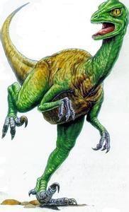 世界上最聪明的恐龙-伤齿龙