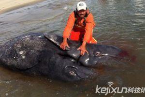 墨西哥海岸惊现深水海怪 科学家证实为连体灰鲸