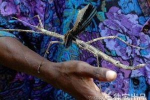 巨型昆虫超过成人手掌 盘点全球奇异昆虫