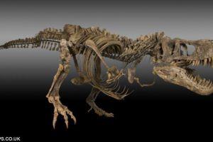 美国发现7000万年前恐龙化石 发现者一夜暴富