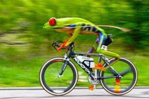 好奇葩!英国男子骑自行车超速被交警开罚单
