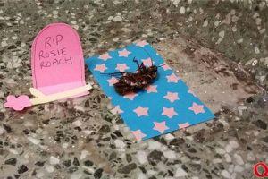 蟑螂最烦人 竟然有人给它立墓碑