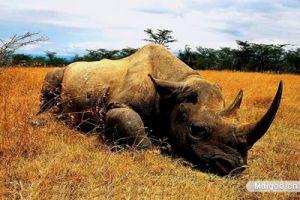 全球十大罕见珍惜动物