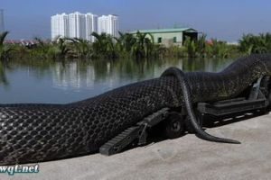 辟谣 北京西单动物园捕获巨型蟒蛇