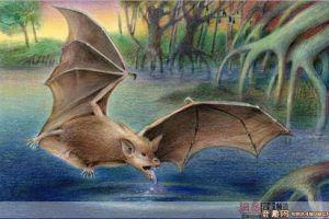 [图文]科学家发现3500万年前巨型蝙蝠化石 翅膀宽3-5米左右