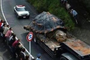 日本山中惊现大乌龟,看到乌龟的表情,网友纷纷质疑