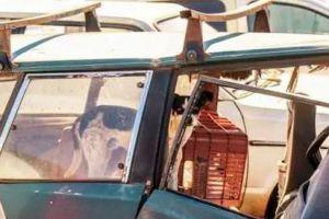 一恶犬霸占着一辆废弃汽车,不让人靠近,背后原因让人流泪