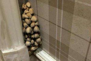 男子新家长出蘑菇,将其拔掉发现越拔越多,查清真相后顿时扎心了