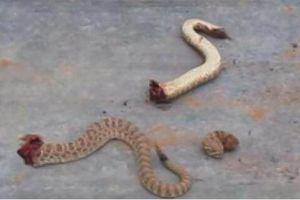 男子将蛇砍成三段,接下来发生的事,让他不淡定了