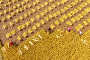 事关1亿农民,从亩产1000斤到亩产1000美金,阿里巴巴凭什么?