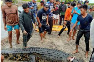 印尼女子被鳄鱼拖下水生吞,愤怒的村民开膛破肚后只剩残骸
