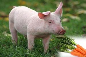 古代人不爱吃猪肉但为何字里都有猪